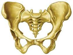 pelvis nedir pelvis kemiği leğen kemiği