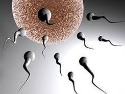 döllenme nedir yumurtanın döllenmesi spermin yumurtaya girişi