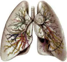 akciğer hastalıkları
