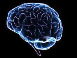 ensefalit nedir beyin sakatlığı beyin hastalığı